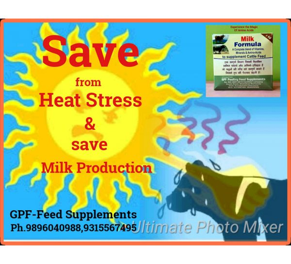GPF Milk Formula_4
